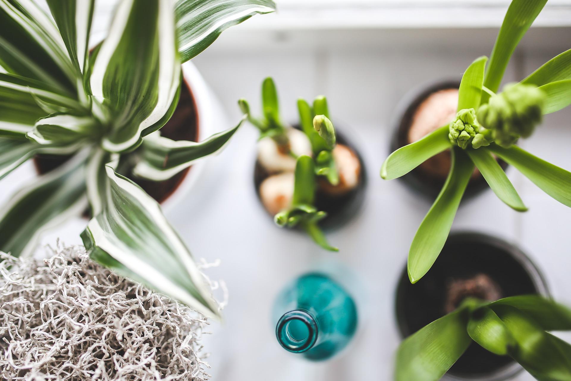 Le piante:un modo originale e unico per continuare a vivere la magia del viaggio a casa