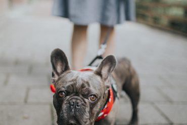 5 buoni motivi per cui avere un cane fa bene alla salute