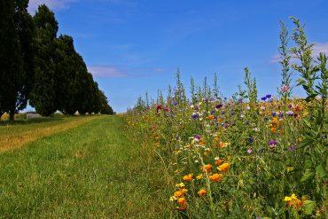 Viaggio da fiaba in Danimarca: l'isola di Fionia